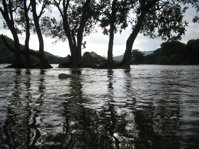 flooding-river-1556419-640x480