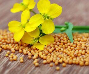 mustard seeds 2